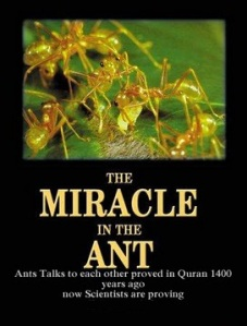 Ants Talks each other proved in Quran – Now scientist are ...
